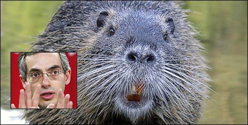 beaver-tony-clement
