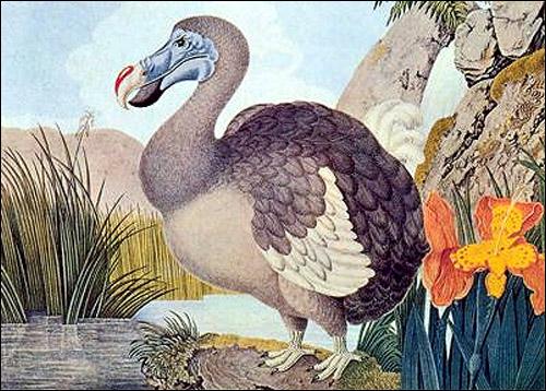 Bloggin-Dodo